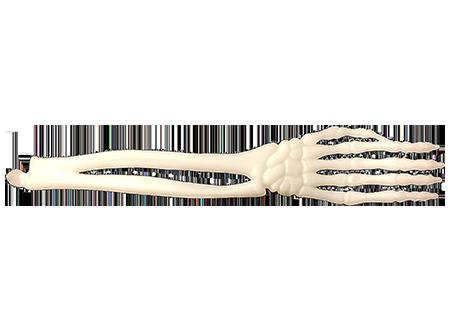 font view of plastic fork bone-style utensil