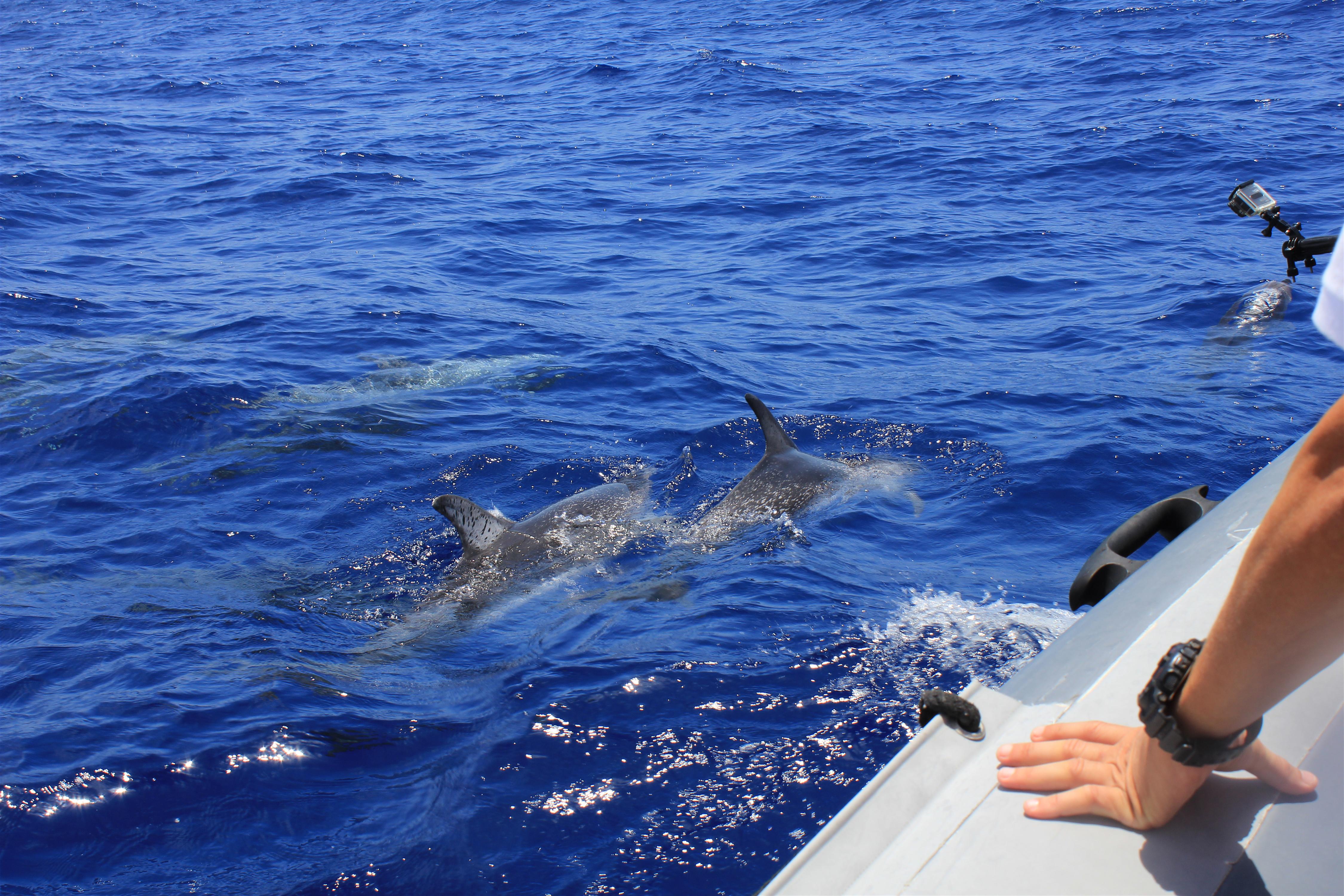 Dolphin Cruise, Dolphin Family