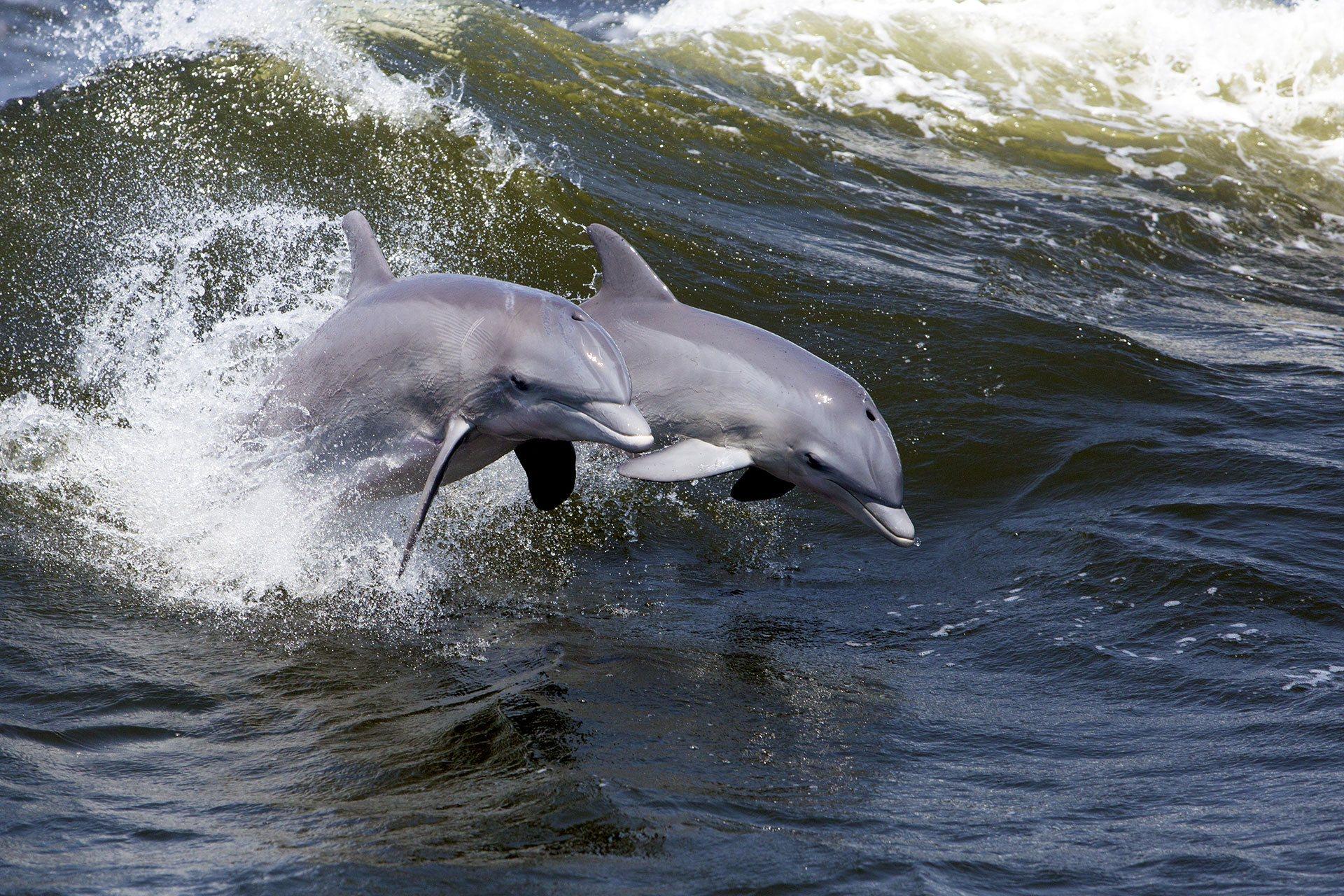 Dolphin Cruise - Bottlenose