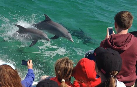 group of kids with phones filming dolphins swimming