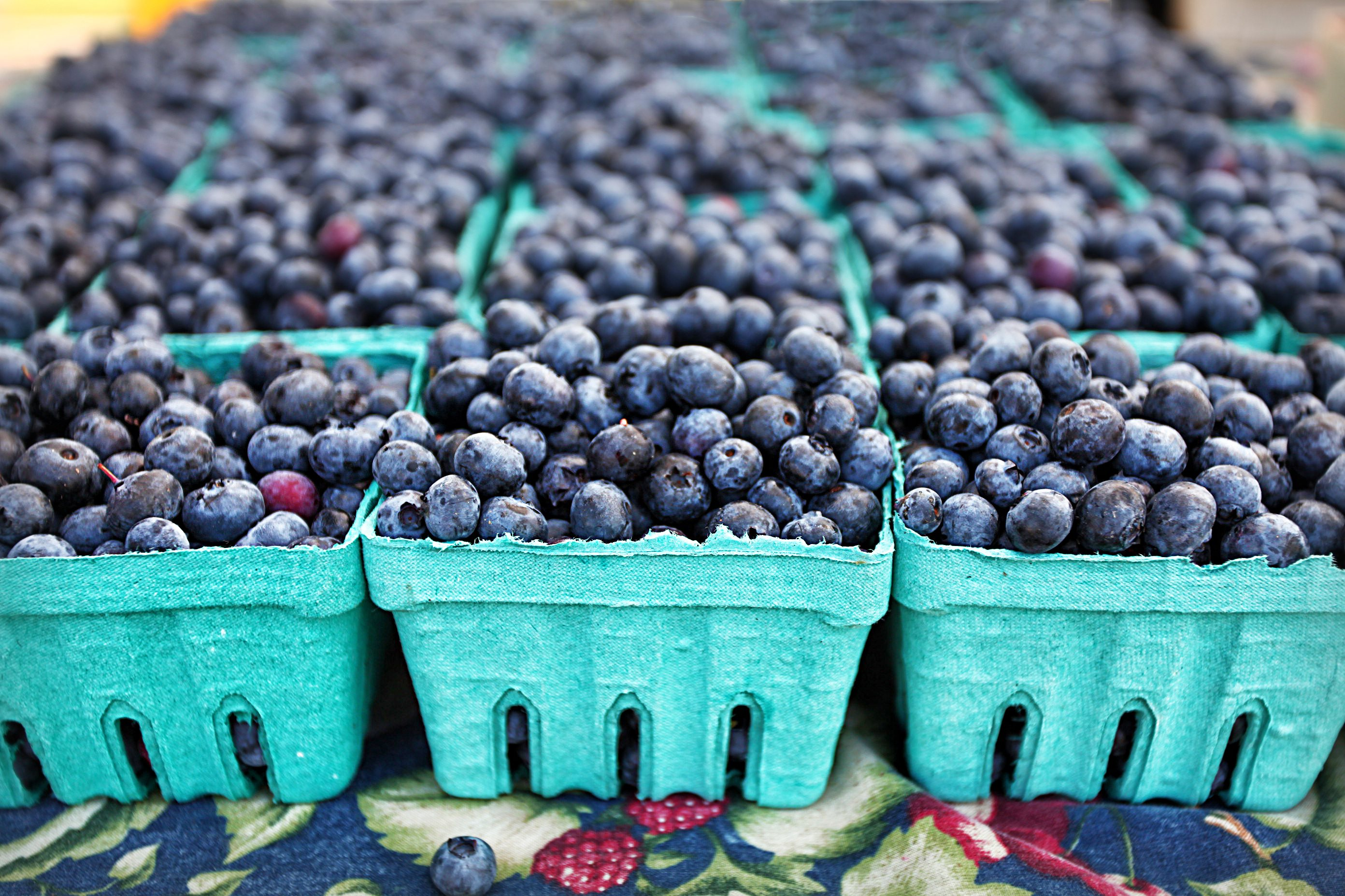 Old River Road BlueBerry Farm