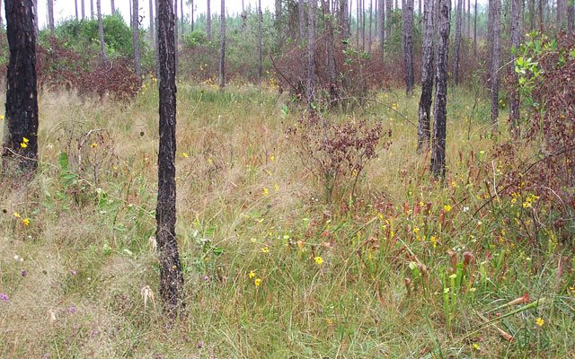 Sweetbay Bogs Preserve
