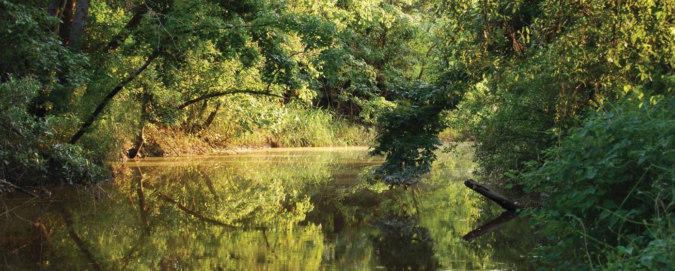 Turkey Creek Blueway