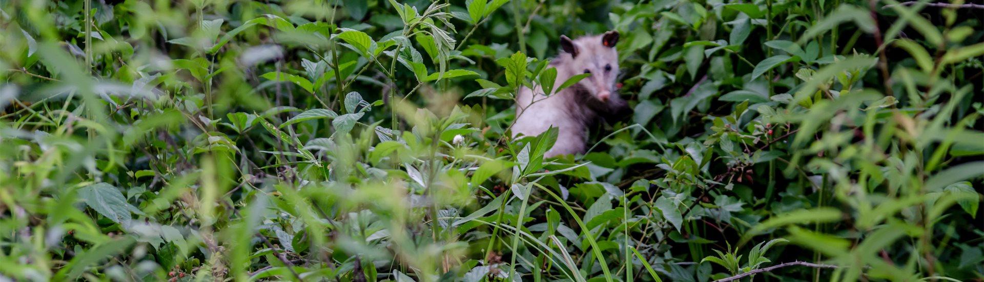 Possum Walk Trailhead