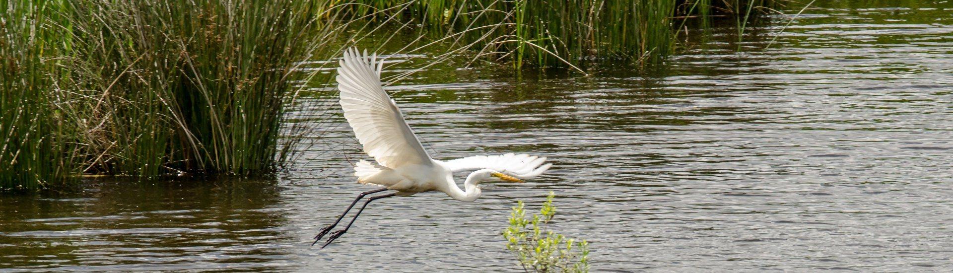 The Pascagoula River Audubon Center