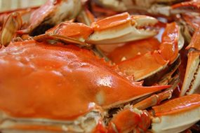 Annual Our Lady of the Gulf Crab Festival