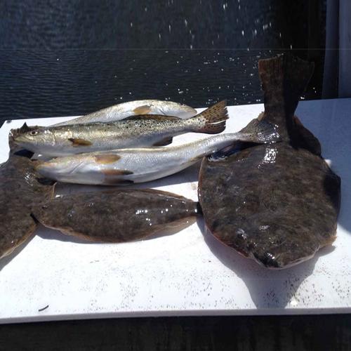 May fish