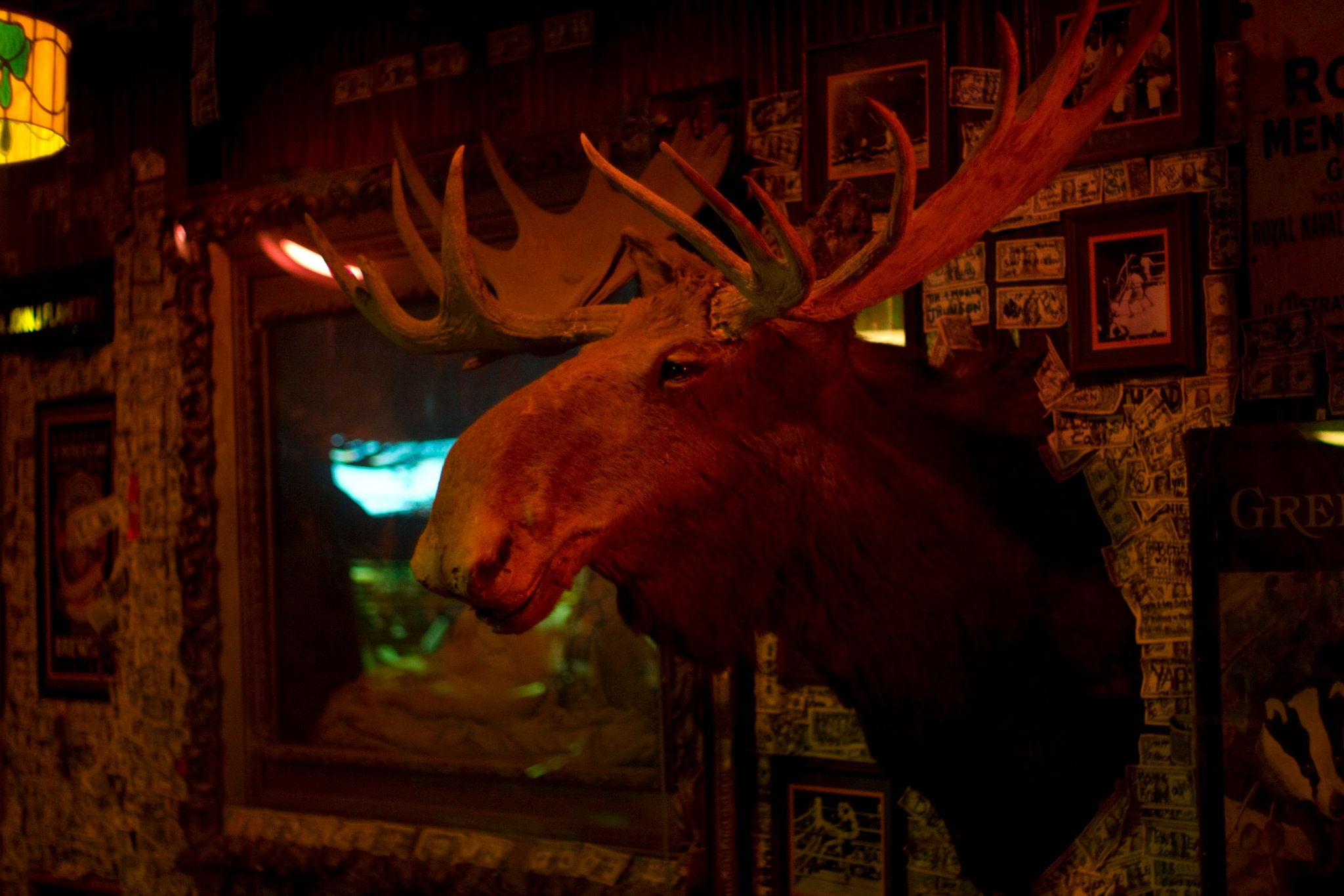 The Moose at McGuires Destin