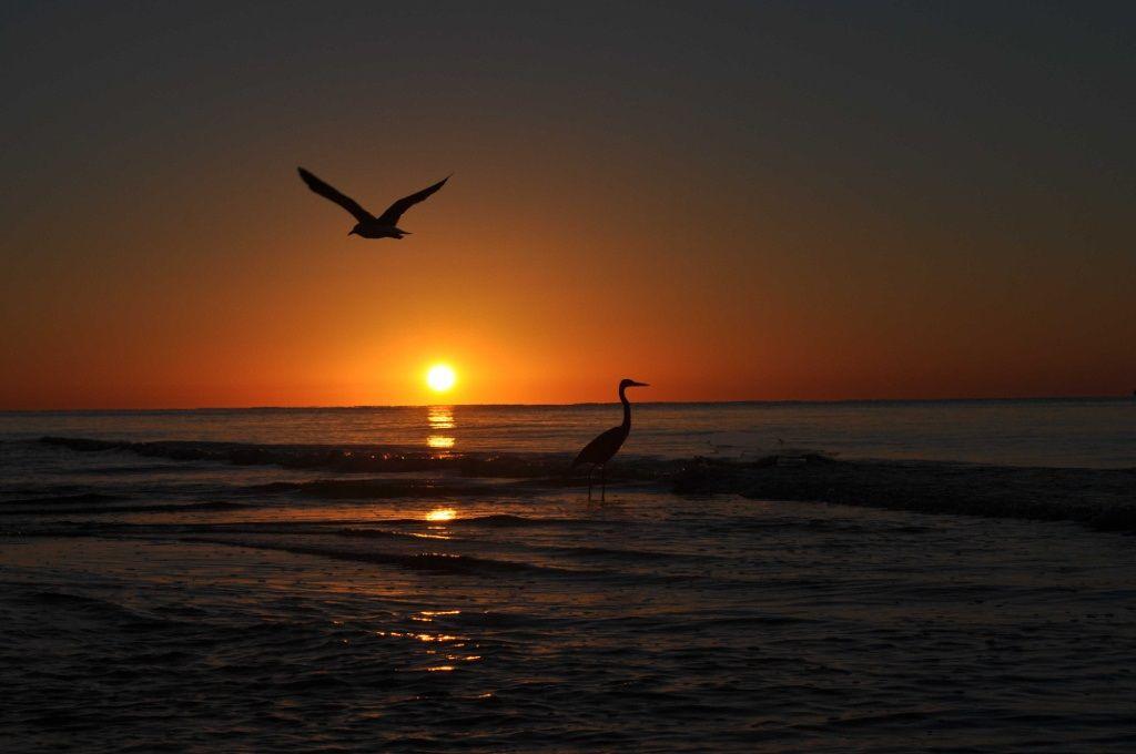 Stunning Sunset from Orange Beach