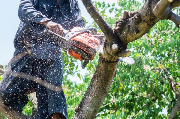 man sawing a branch