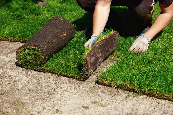 image of a man laying sod