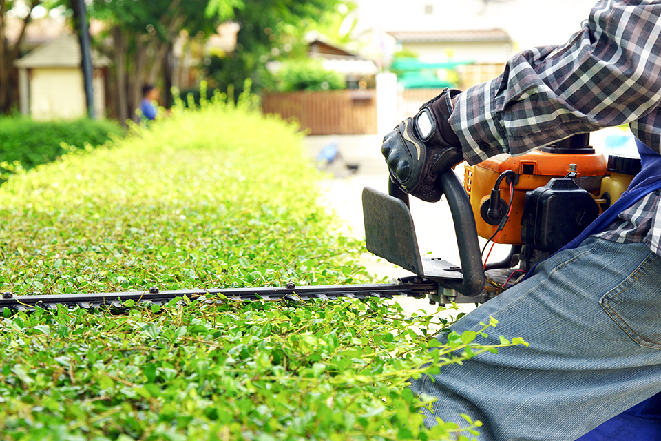 image of a person trimming shrubs
