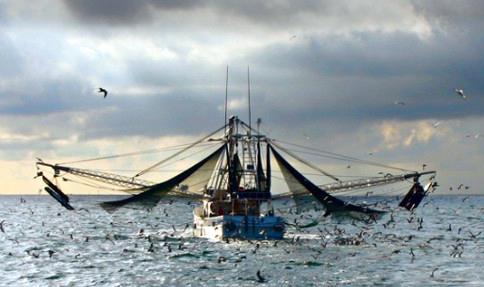 Shrimp Boat Fishing
