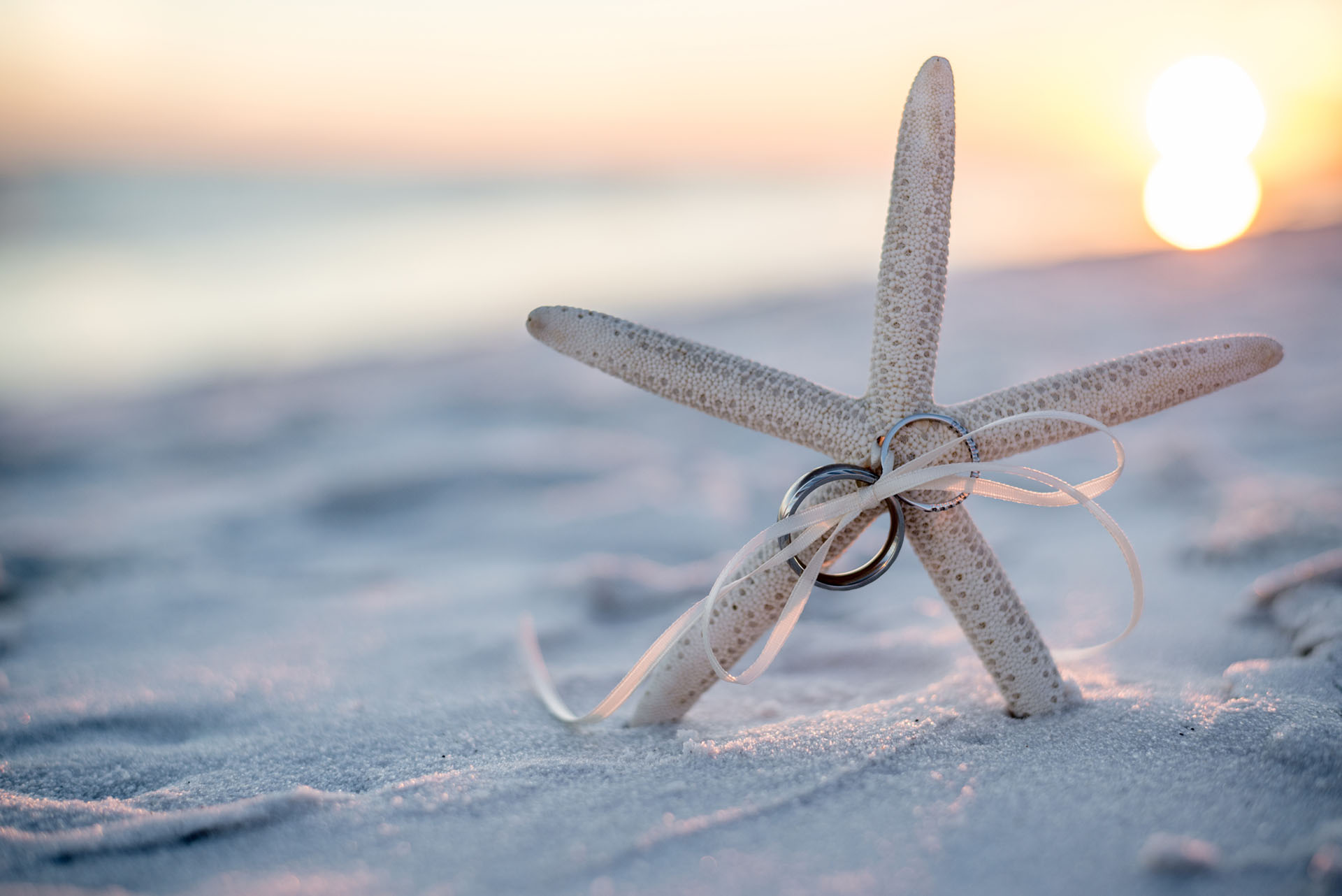 Starfish with rings in a sunset