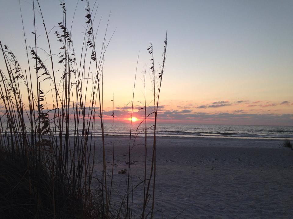 sunset through sea oats
