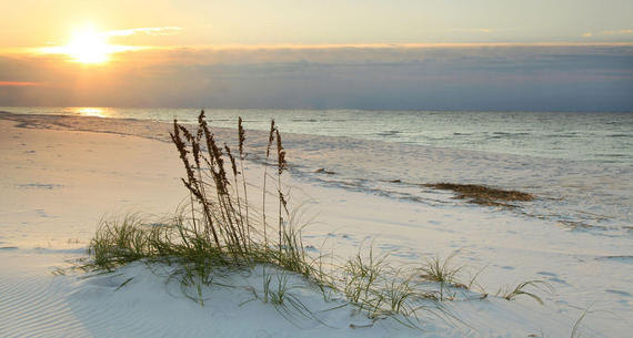 sunset view of sea oats on the beach