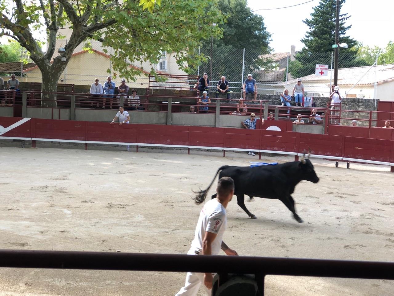 Bullfight event