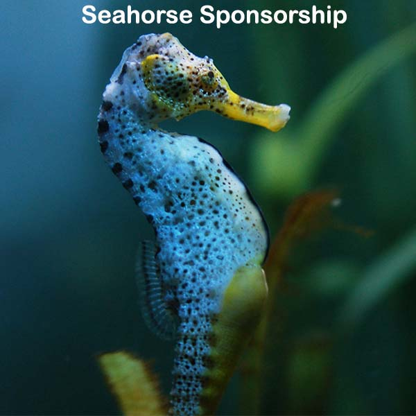 Seahorse Sponsorship