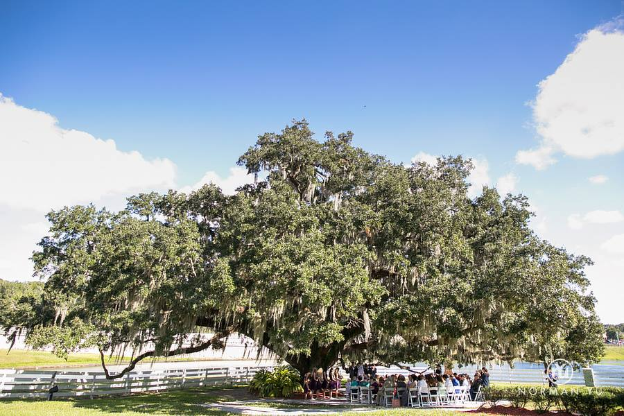wide shot of ceremony under tree