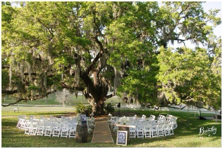 Outdoor wedding venue under a tree