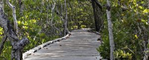 an image of a wooden boardwalk in the forest