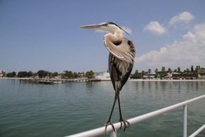 pelican looking at a body of water