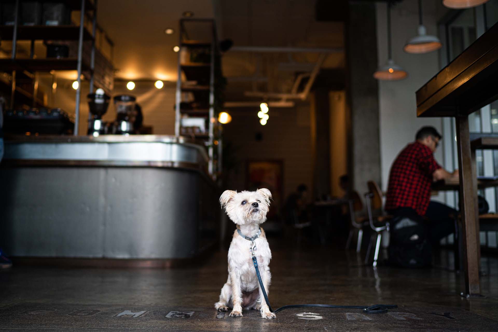 A dog sitting in the West Hollywood Coffee Commissary location