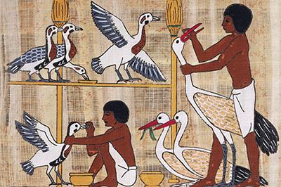 Egyptian Gavage
