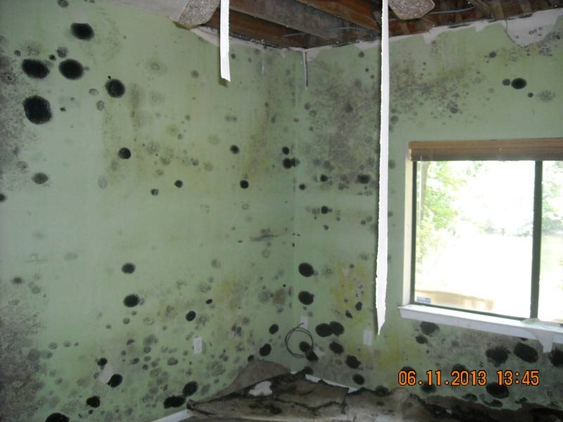 Mold Buildup inside a room