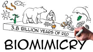 Cartoon describing Biomimicry as 3.8 billion years of R & D