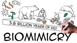 Cartoon describing Biomimicry as 3.8 billion years of R & D