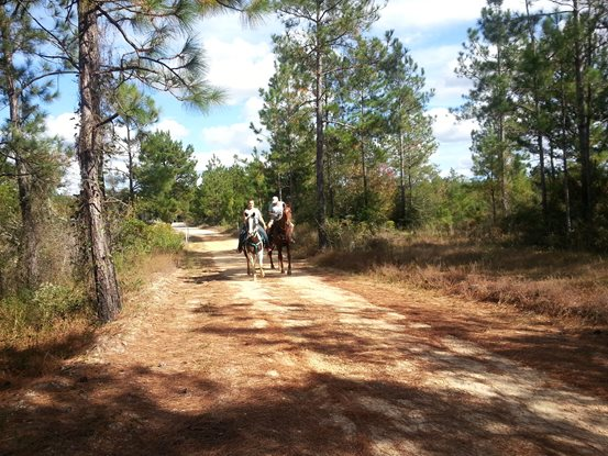 Riding horses on trails