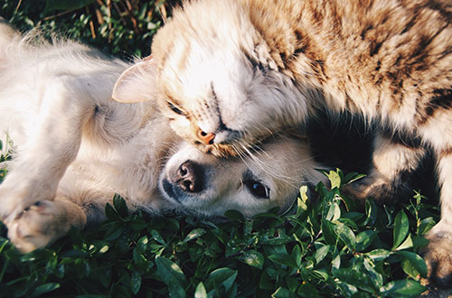 Image of Cat and a Dog Playing